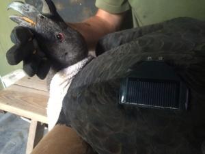 condor health check