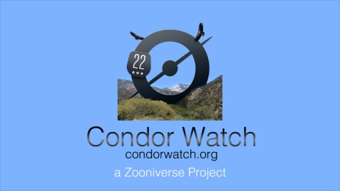 condor-watch-title